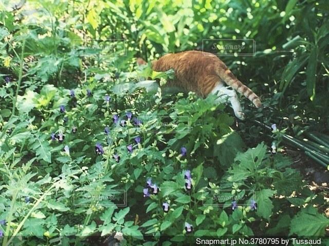 茂みに隠れる猫の写真・画像素材[3780795]