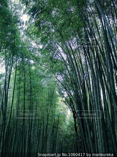 京都嵐山  竹林の小径の写真・画像素材[1060417]