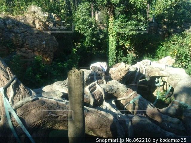 寝ているゴリラの写真・画像素材[862218]
