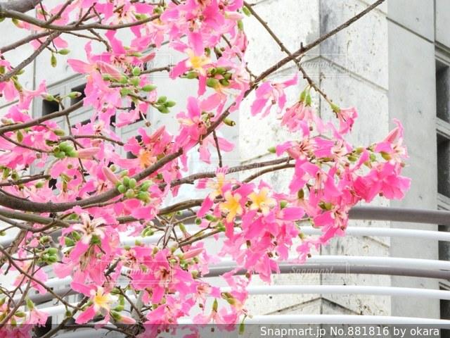 近くの花のアップの写真・画像素材[881816]