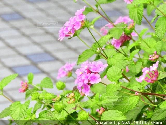 近くの花のアップの写真・画像素材[914931]
