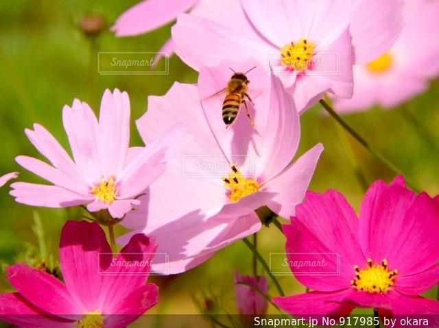 近くの花のアップの写真・画像素材[917985]