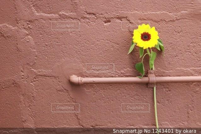 近くに黄色い花のアップの写真・画像素材[1243401]