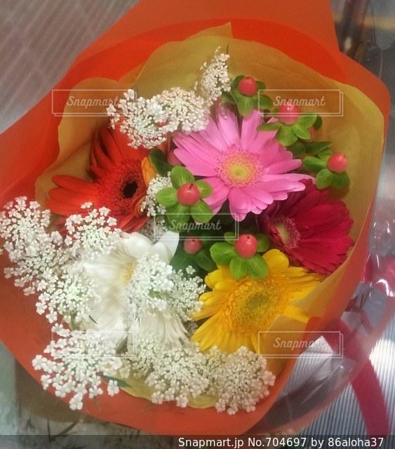 花の写真・画像素材[704697]