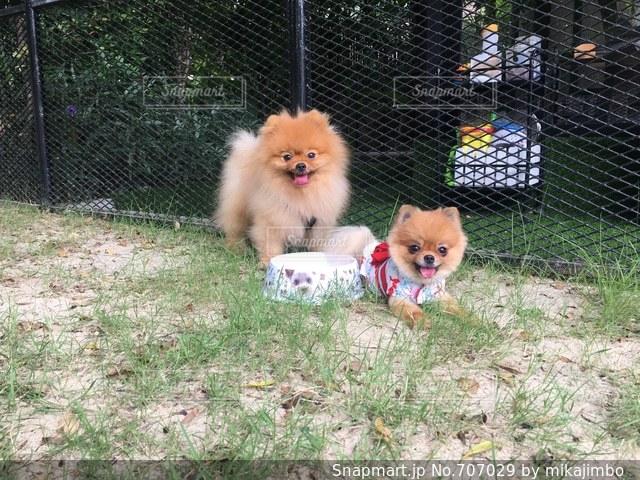 フェンスの前に座っている犬の写真・画像素材[707029]