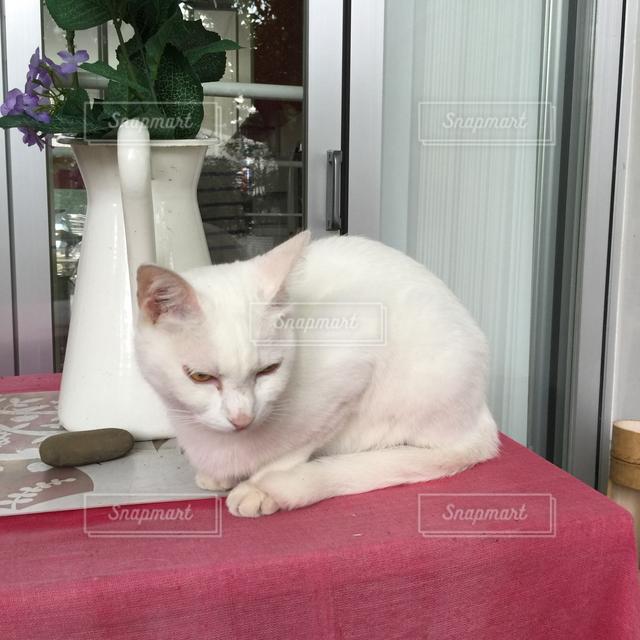 猫の写真・画像素材[122062]
