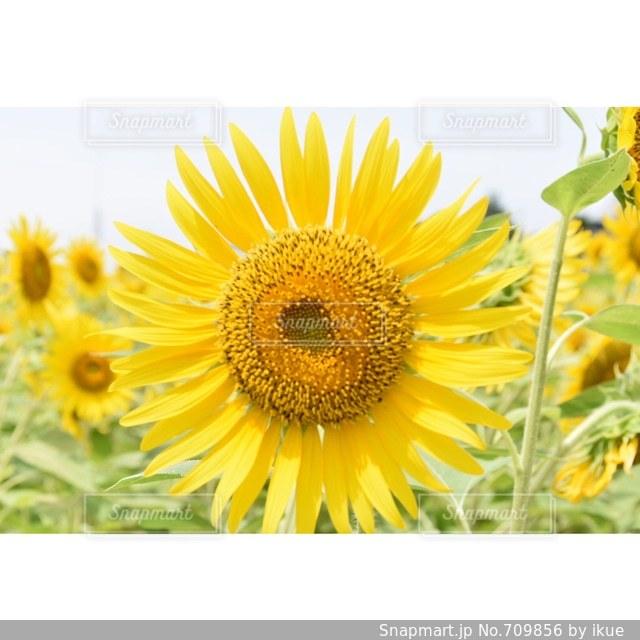 近くの花のアップの写真・画像素材[709856]