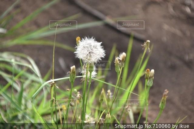 近くの花のアップの写真・画像素材[710060]