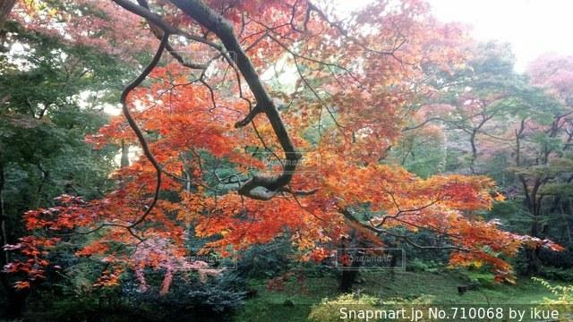 フォレスト内のツリーの写真・画像素材[710068]