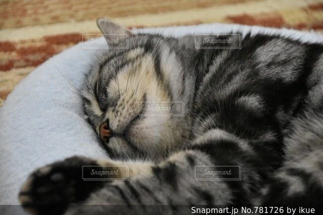 ベッドの上で横になっている猫の写真・画像素材[781726]