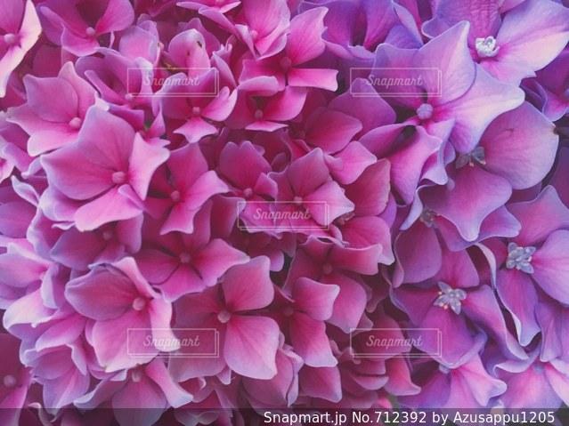 近くに紫の花の房のアップの写真・画像素材[712392]