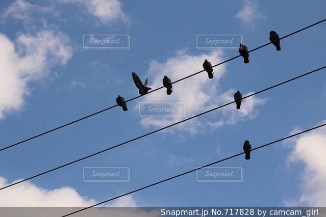 電線にとまった鳩の写真・画像素材[717828]