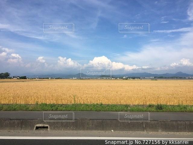 そのもの青き衣をまとい金色に野に降り立ちの写真・画像素材[727156]