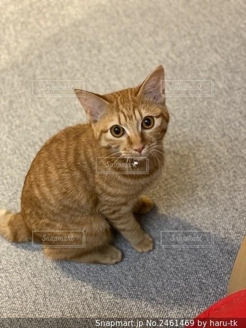 床に座っている猫の写真・画像素材[2461469]