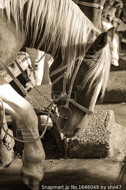 馬の写真・画像素材[1646049]