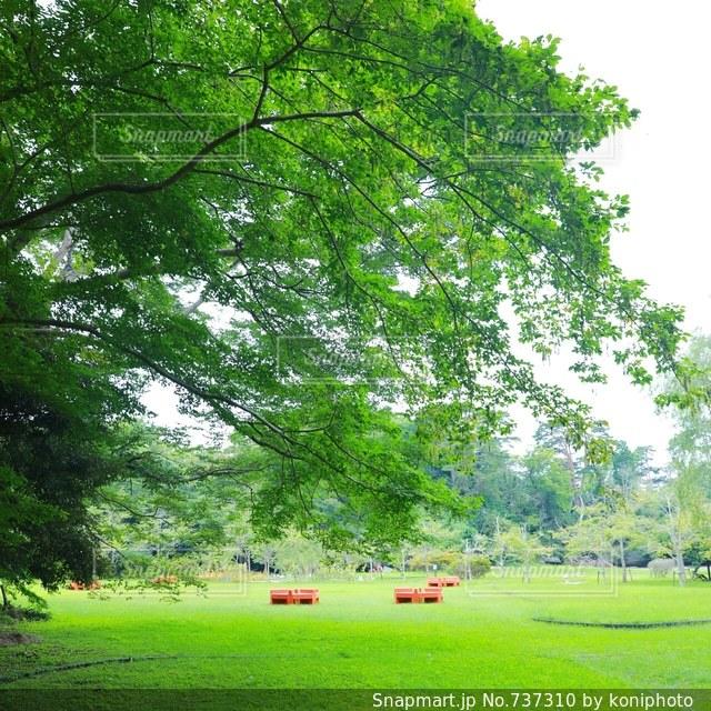 緑豊かな緑のフィールドの真ん中の木の写真・画像素材[737310]