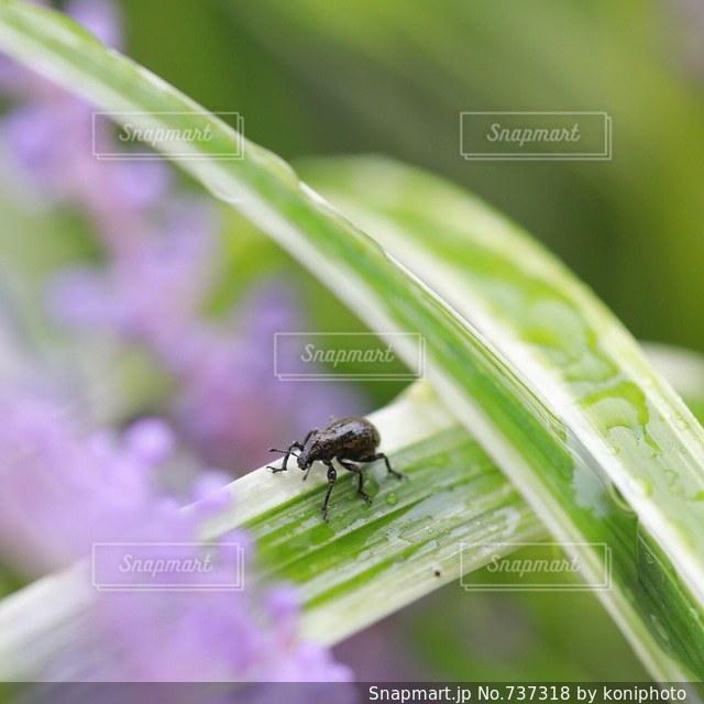 近くの花のアップの写真・画像素材[737318]