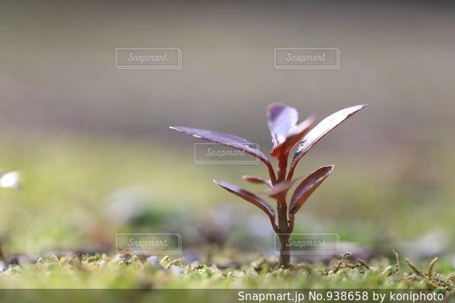 成長する芽の写真・画像素材[938658]