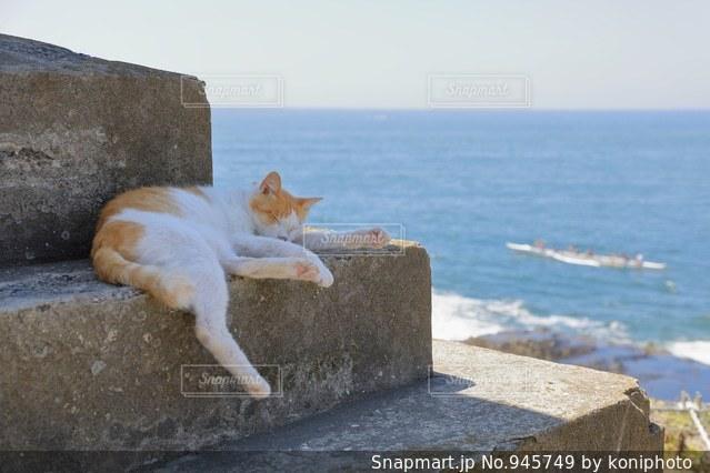 波の音を聞きながら昼寝する猫の写真・画像素材[945749]