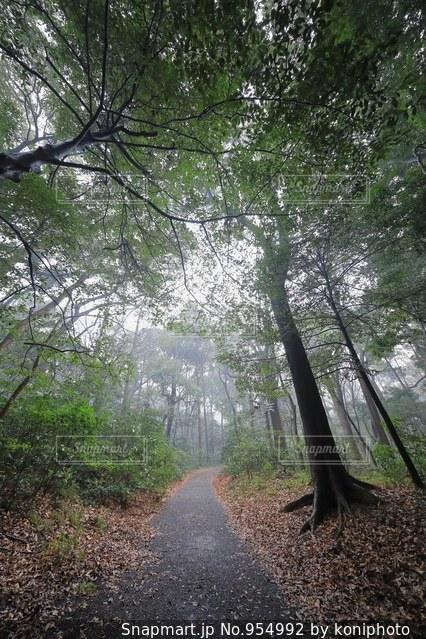 朝霧の林道の写真・画像素材[954992]