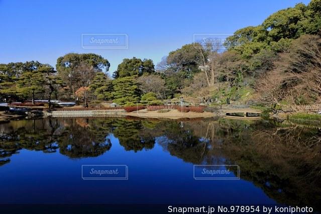 皇居東御苑の庭園の写真・画像素材[978954]