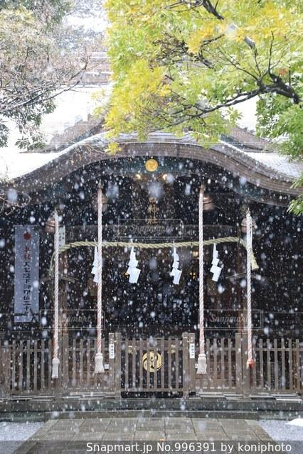 雪降る神社の境内の写真・画像素材[996391]