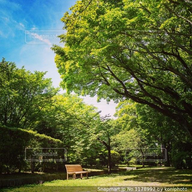 木の下にあるベンチの写真・画像素材[1178992]