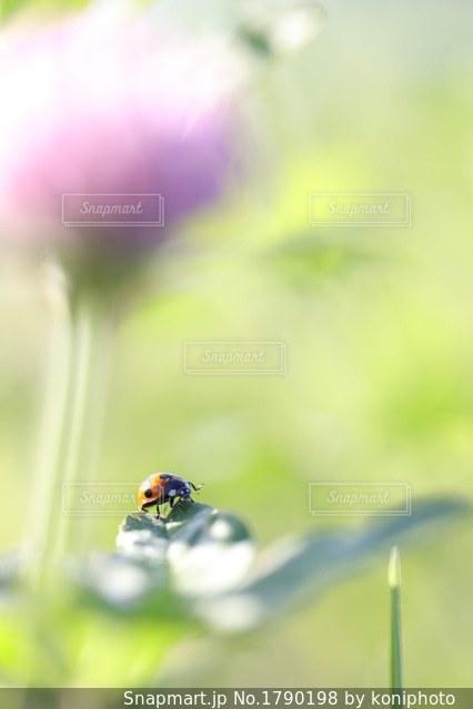 花のぼやけた下にテントウムシの写真・画像素材[1790198]