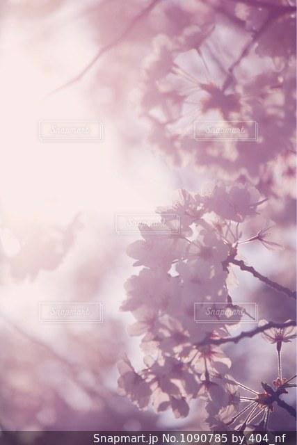 近くの花のアップの写真・画像素材[1090785]