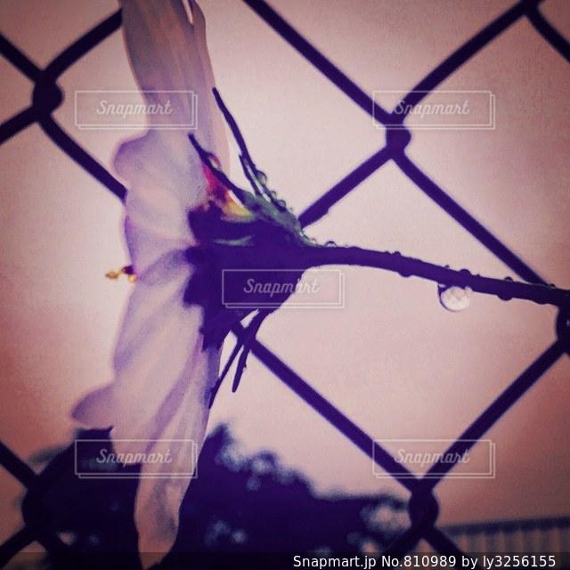 静かに咲くの写真・画像素材[810989]