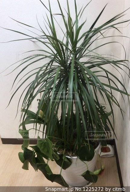 植物の写真・画像素材[1225272]