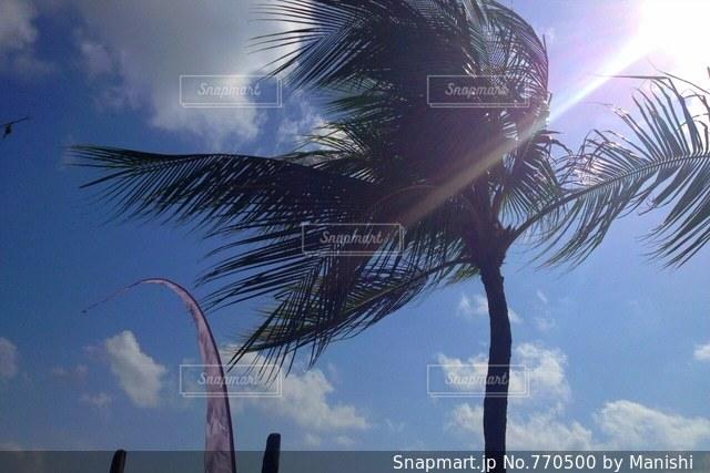 ヤシの木の写真・画像素材[770500]