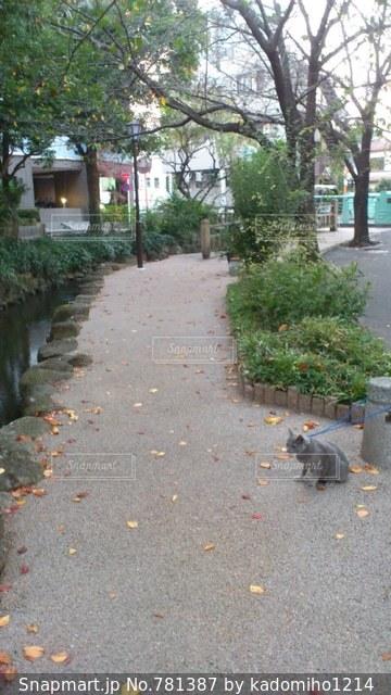 猫とお散歩の写真・画像素材[781387]