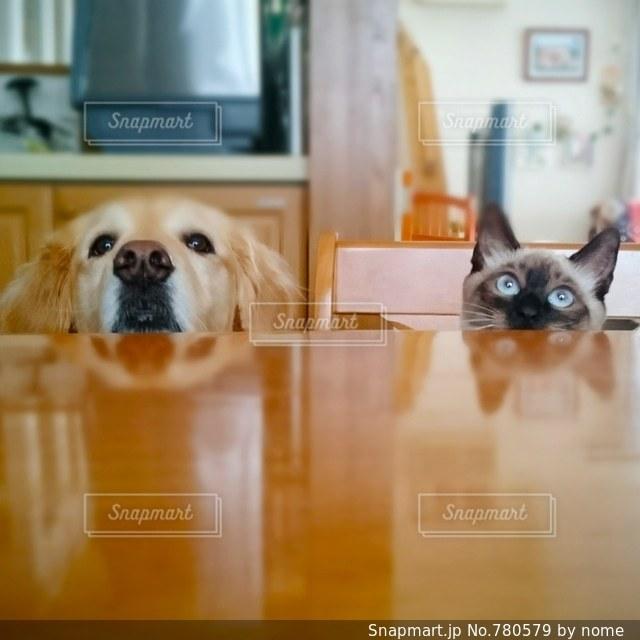 テーブル越しの犬と猫の写真・画像素材[780579]