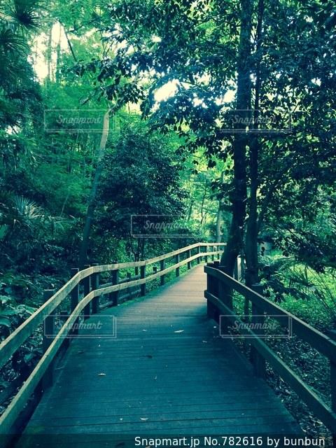 橋の近くの木製のベンチ - No.782616