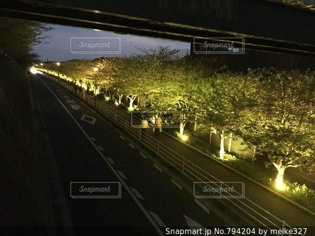 夜の桜並木の写真・画像素材[794204]