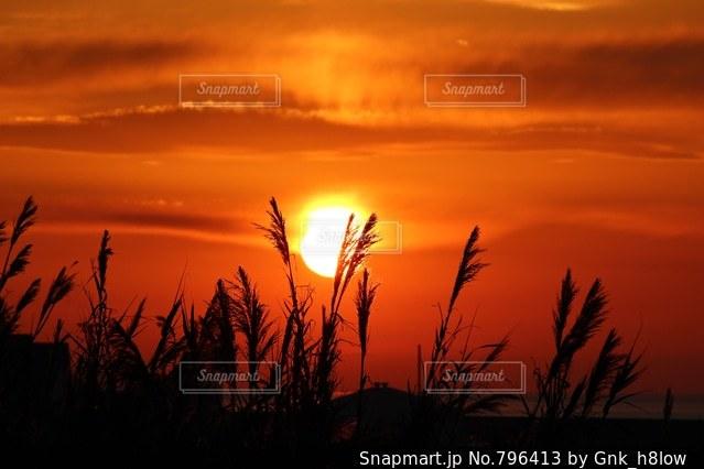 すすき見る夕日の写真・画像素材[796413]