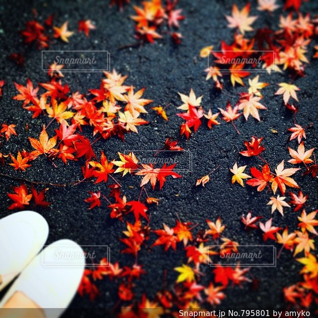 colorful autumnの写真・画像素材[795801]