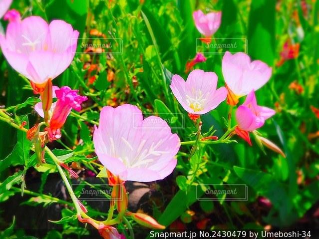 花のクローズアップの写真・画像素材[2430479]