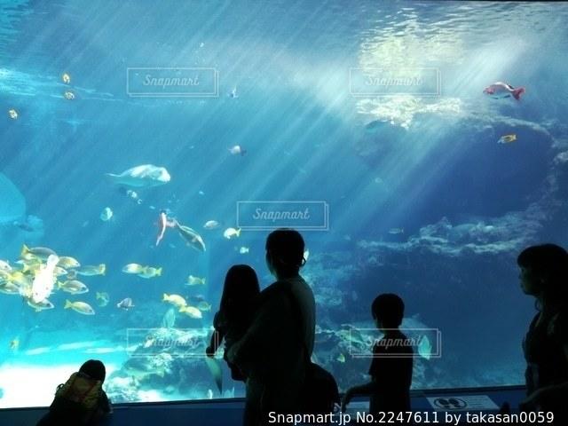 水族館の親子の写真・画像素材[2247611]