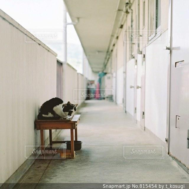 猫の写真・画像素材[815454]