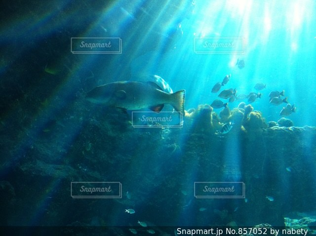 美ら海水族館の写真・画像素材[857052]