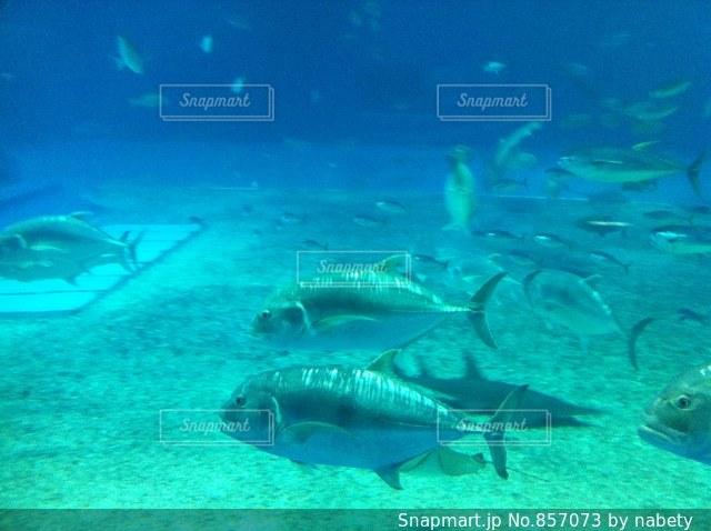 美ら海水族館の写真・画像素材[857073]