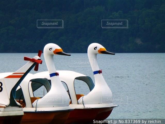 スワンボートの写真・画像素材[837369]