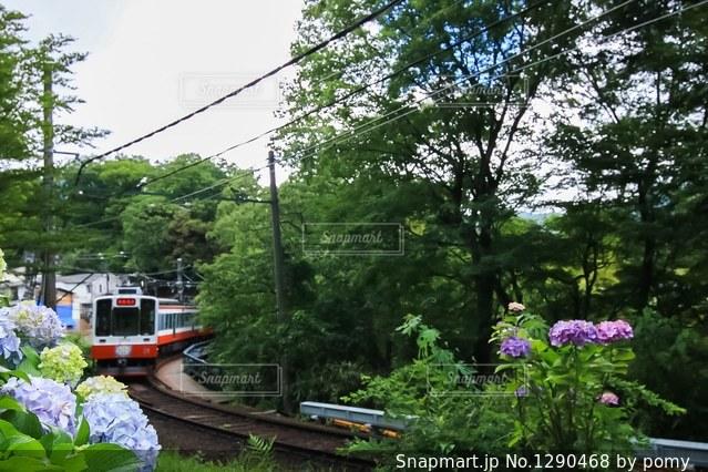 紫陽花と電車の写真・画像素材[1290468]