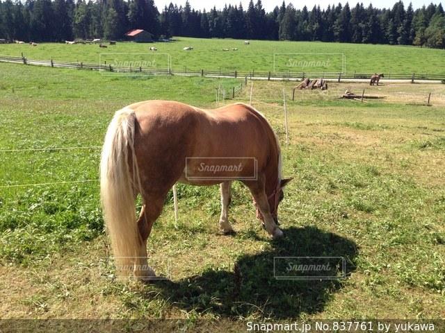 ドイツ ヴィース教会近くの馬の写真・画像素材[837761]