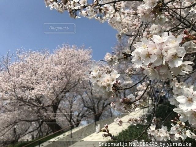 木の花の花瓶の写真・画像素材[1089445]