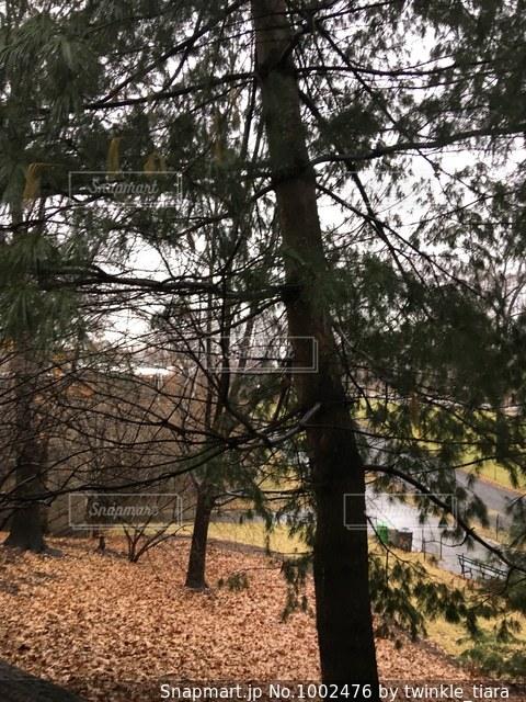 ニューヨーク セントラルパークの木の写真・画像素材[1002476]