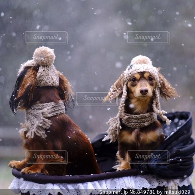 茶色と白の犬のグループの写真・画像素材[849781]