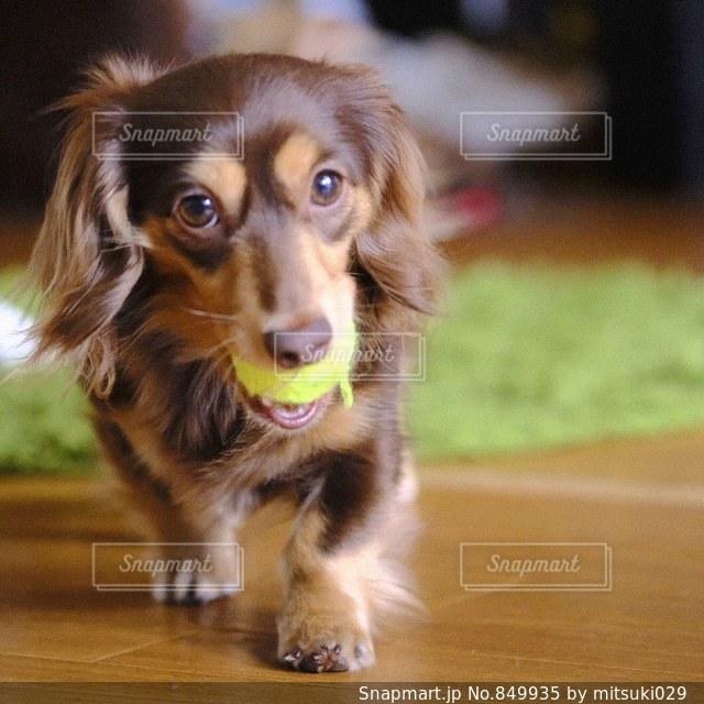 その口でフリスビーを保持している犬の写真・画像素材[849935]